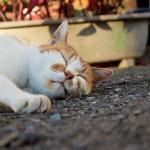 睡眠不足を解消する9の方法!今からはじめるぐっすり快眠対策
