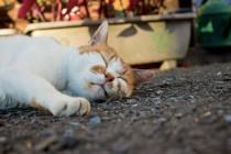 睡眠不足の解消方法