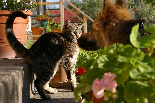 cat-793276_640