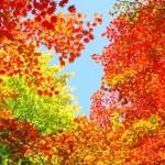 体験する秋!紅葉とプラスαが楽しめるスポット~関東編~