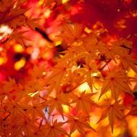 【東京】11月頃から見頃になる紅葉スポット10選!