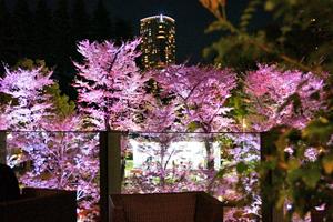 122名確定!ライトアップされた桜は必見!【♂30代40代中心】120名大人のお花見&テラスパーティー